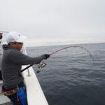 4月28日(土)隠岐の島  島後  キャスティング&ジギング    キャスティングでは大型がヒットするも中々取れず断念😭ジギングに切り替えヒラマサの良型や根魚を釣り、お土産確保することができました💦