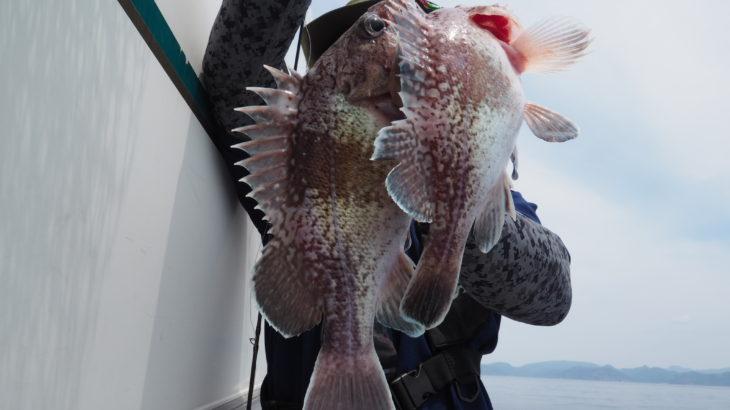 5月15日(水)隠岐の島  スロージギング   60m〜100m前後の魚の活性はあまり良くなかったですが、中深海の活性が高く良く釣れました!