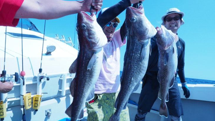 9月14日 隠岐の島中深海ジギング!タラのポイントでは、小さなタラがヒットするとそれを喰いにイシナギと思われるモンスターが次々と襲ってきてジグロストが半端なかったです😭でも良く釣れて皆さんとても楽しい釣りが出来たと思います✨