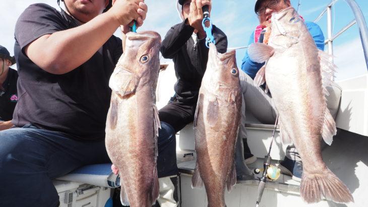 9月21日(月)  隠岐の島ジギング! タラ釣りに行く予定でしたが、波が高いので中深海での釣りに変更しアラ爆釣になりました! アラ4〜6キロ5本、コアラ4本、タヌキ70匹、ガシラ、レンコでした。