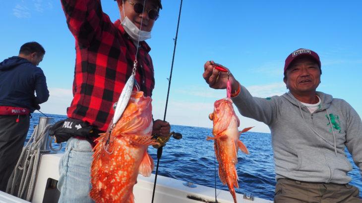 10月18(日)  隠岐の島ジギング! 今日は、島前方面に行って来ました!朝のうちは、アタリも頻繁にありそれなりに釣れてましたが、お昼が近づくに釣れアタリが次第に遠退き終了となりました💦 ヒラメ、ハガツオ、カサゴ、アコウ、ヒラマサ、沖メバル、チカメ、フエフキダイ、レンコでした。