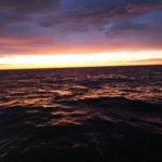 7月16日(金) 「23時出船便」微妙な朝ラッシュ!?  ポイントに着くと直ぐに釣れ出し一安心!微妙なローリングにより二人ダウン(汗)  朝方までポロポロ程度で微妙ラッシュを終えて夜明けとなりました。 白イカ4〜52杯 船中358杯 スルメ多数