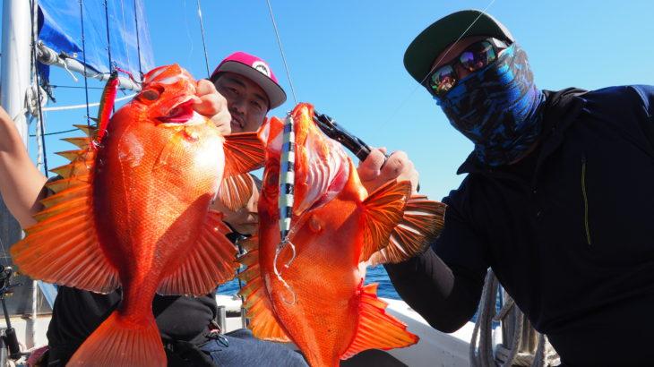 10月10日(日)  「隠岐の島ジギング」昨日は、シケの為中止にしましたが、本日は海も穏やかになりとても釣りやすく魚の活性もマズマズでした!タングステンのジグは良く釣れてましたが、ロストが怖い(汗)